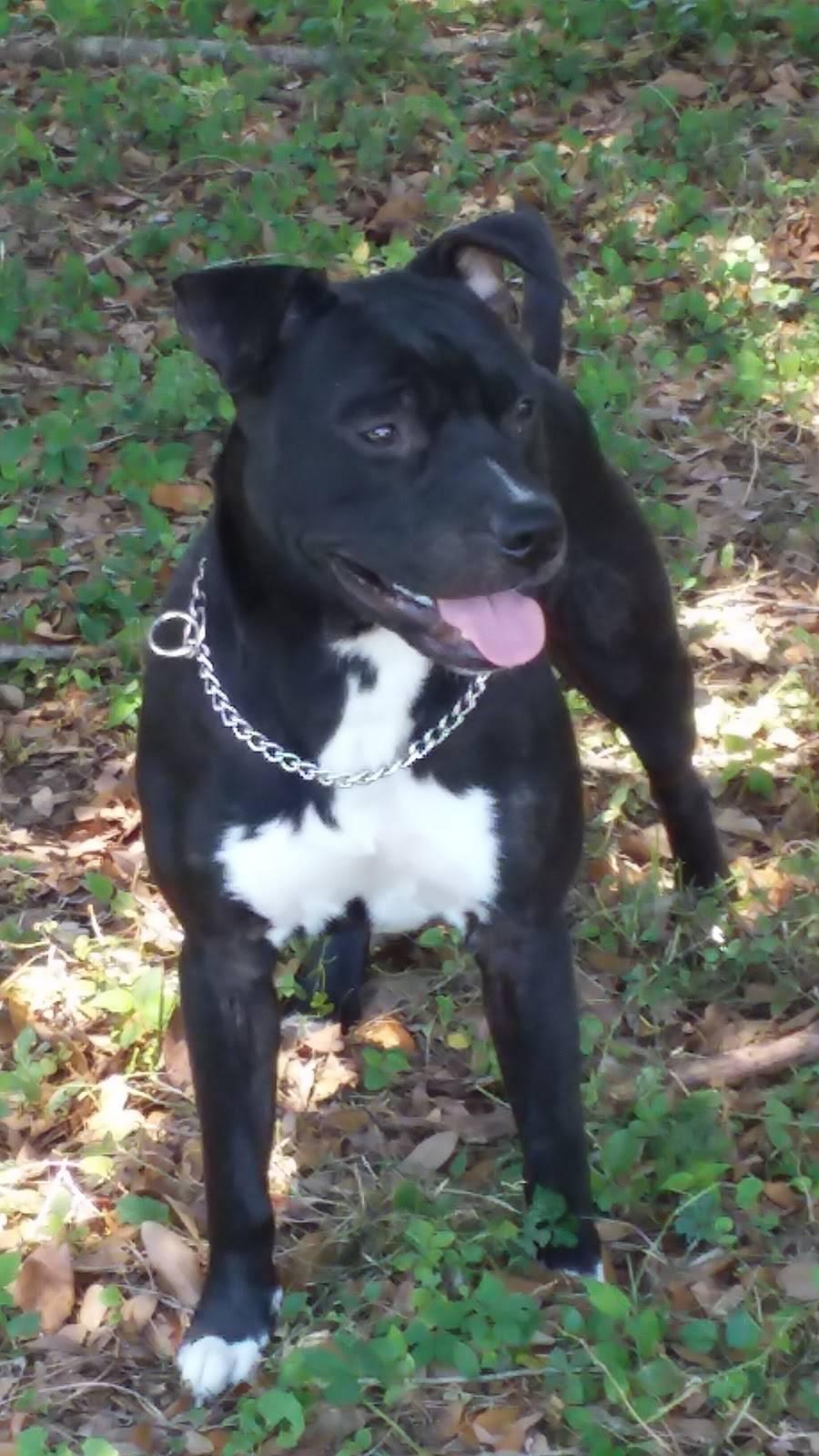 TLC Petsnip Inc. - veterinary care  | Photo 8 of 8 | Address: 11524 US-92 E, Seffner, FL 33584, USA | Phone: (863) 686-7647 ext. 140