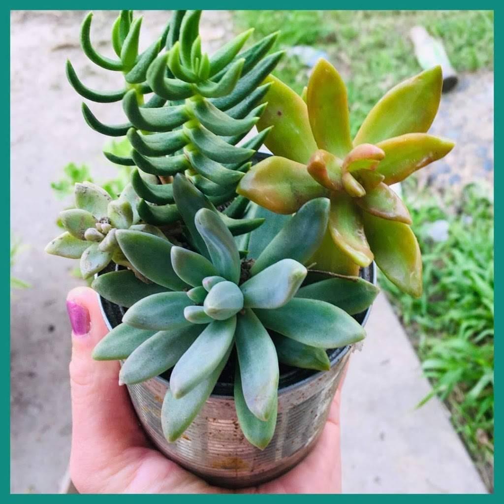 Succulent Garden Art - park  | Photo 2 of 10 | Address: 6701 E 9th St, Long Beach, CA 90815, USA | Phone: (951) 450-9344