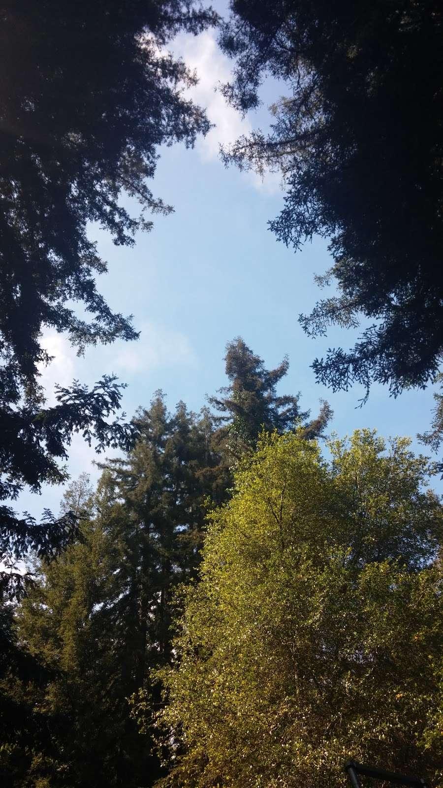Forest Springs Improvement & Maintenance - park  | Photo 2 of 5 | Address: 401 Acorn Dr, Boulder Creek, CA 95006, USA | Phone: (831) 338-7134