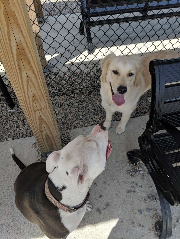 Boneyard Dog Park - park  | Photo 5 of 10 | Address: Kingston, MA 02364, USA