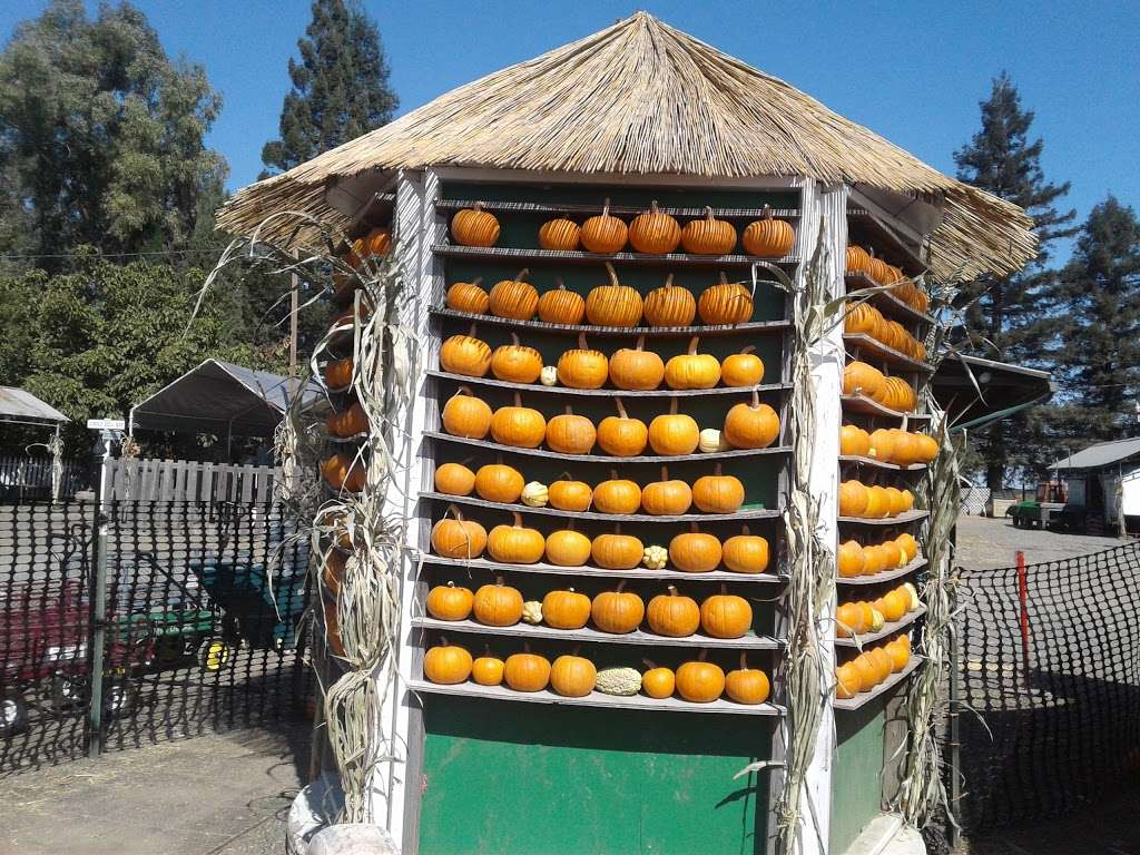 Silveyville Christmas Tree and Pumpkin Farm - store  | Photo 3 of 9 | Address: 6248 Silveyville Rd, Dixon, CA 95620, USA | Phone: (707) 678-1823