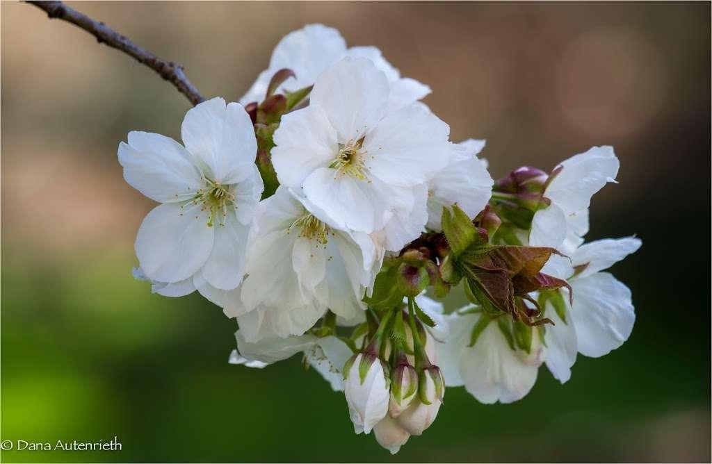 The Jane Watson Irwin Perennial Garden - park  | Photo 8 of 10 | Address: 2900 Southern Blvd, The Bronx, NY 10458, USA | Phone: (718) 817-8700