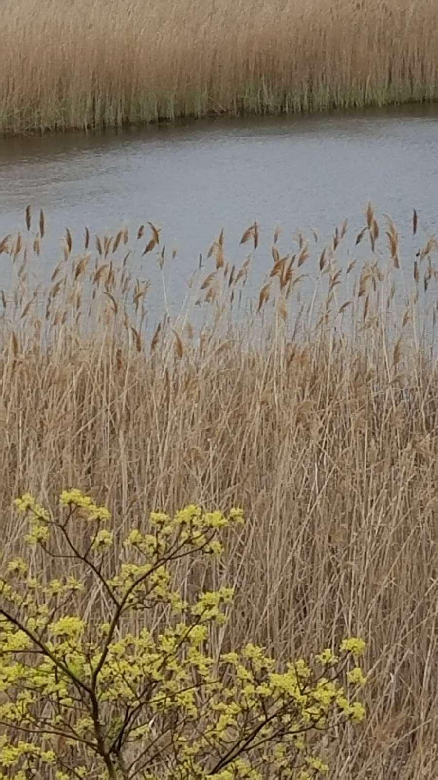Ridgewood Reservoir - park    Photo 5 of 9   Address: Jackie Robinson Pkwy, Brooklyn, NY 11208, USA   Phone: (212) 639-9675