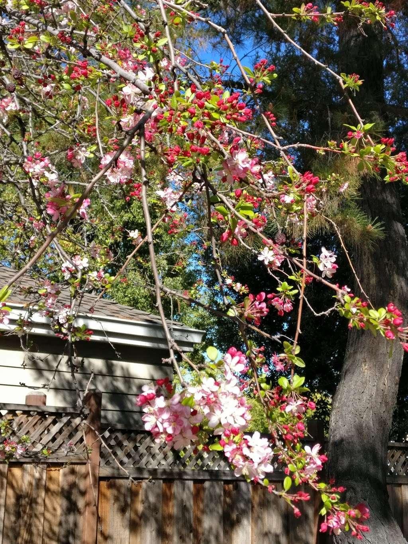 Trailhead - park    Photo 8 of 8   Address: Prospect Rd, Cupertino, CA 95014, USA