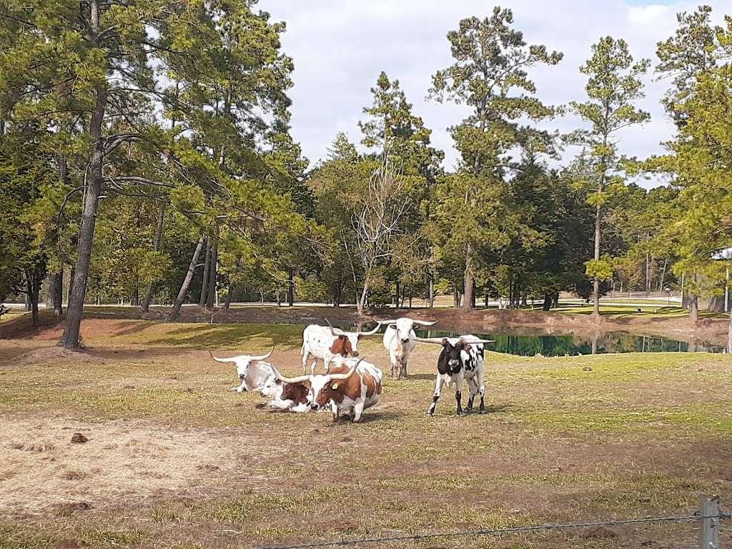 Lone Star Trailhead #4 - park  | Photo 8 of 9 | Address: FM 149, Montgomery, TX 77356, USA | Phone: (936) 344-6205
