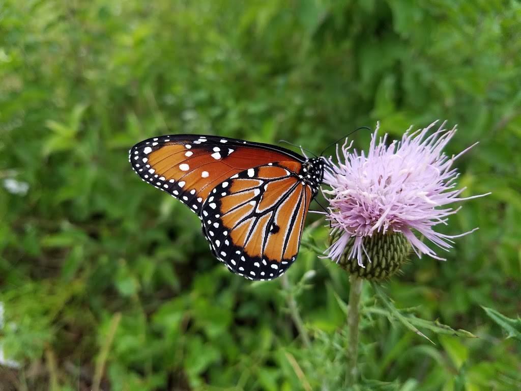 Heard Natural Science Museum & Wildlife Sanctuary - museum  | Photo 3 of 7 | Address: 1 Nature Pl, McKinney, TX 75069, USA | Phone: (972) 562-5566