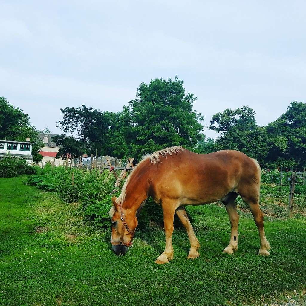 Landis Valley Farm - museum  | Photo 6 of 10 | Address: 2451 Kissel Hill Rd, Lancaster, PA 17601, USA | Phone: (717) 569-0401
