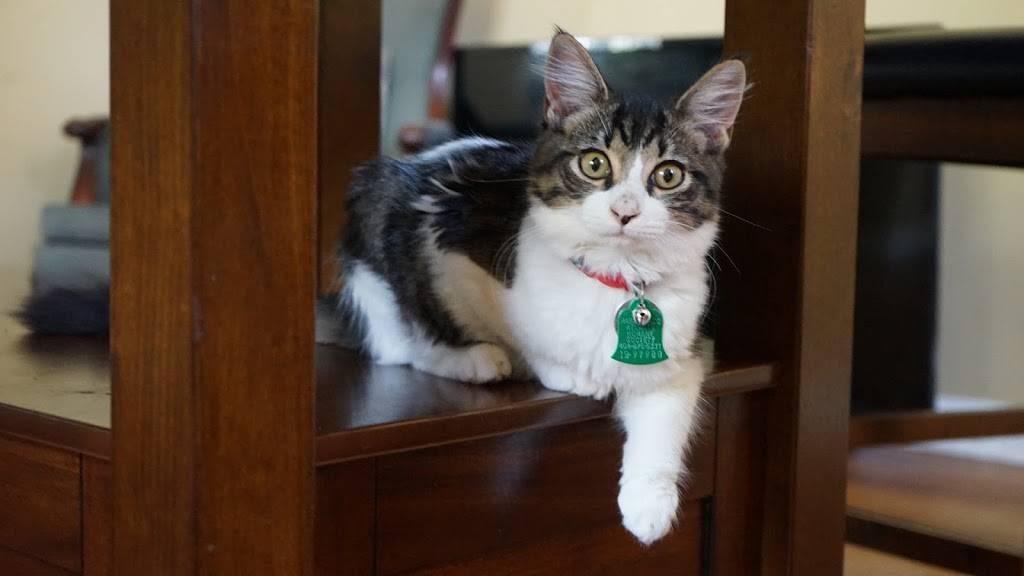 VCA Buckhead Animal Hospital - veterinary care  | Photo 3 of 9 | Address: 1911 Piedmont Cir NE, Atlanta, GA 30324, USA | Phone: (404) 873-3771
