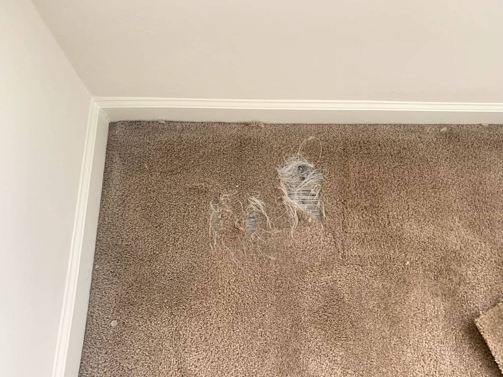Tidewater Carpet Repair - laundry  | Photo 8 of 8 | Address: 5432 Ashby St, Norfolk, VA 23502, USA | Phone: (757) 648-0586