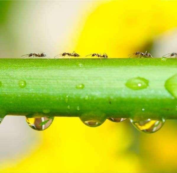 Nature Science Pest Control, Inc. - home goods store  | Photo 3 of 3 | Address: 607 Martin Ave #100, Rohnert Park, CA 94928, USA | Phone: (707) 586-2514