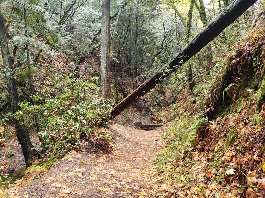Sam Trail - park  | Photo 6 of 10 | Address: 15808 Sanborn Rd, Saratoga, CA 95070, USA