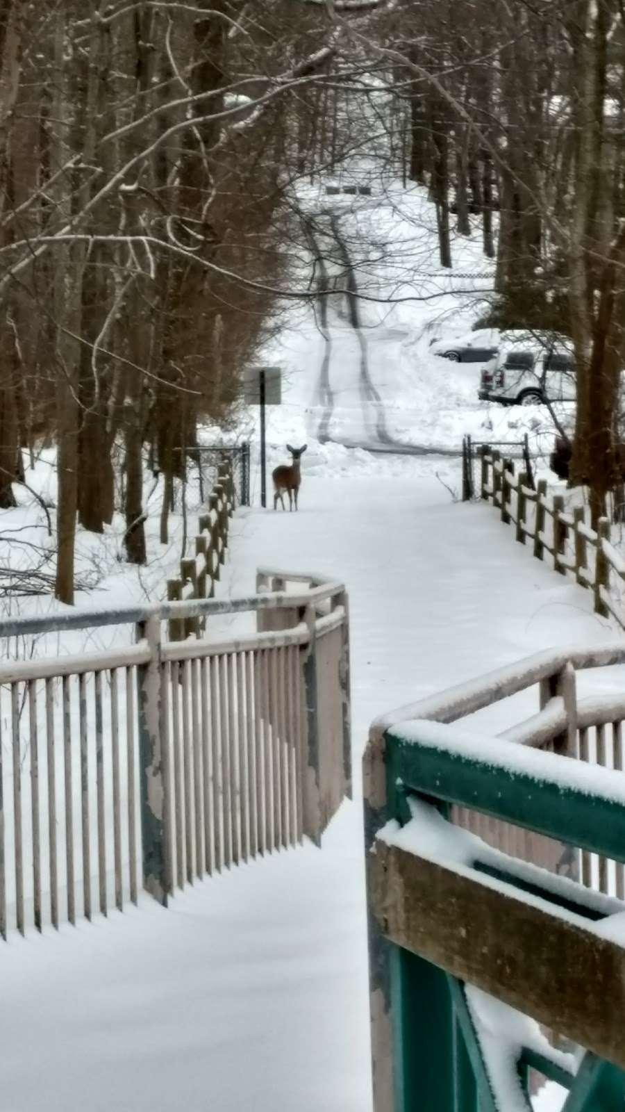 Flat Rock Brook Nature Center - park  | Photo 9 of 10 | Address: 288 Jones Rd, Englewood, NJ 07631, USA