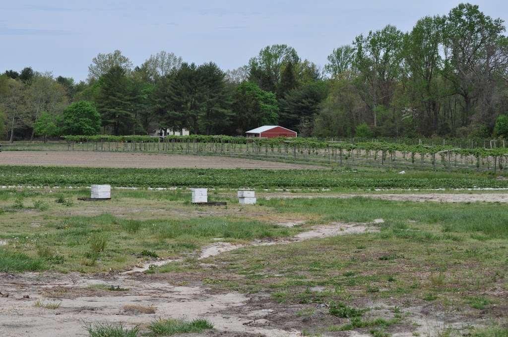 Fruitwood Farms, Inc. - store  | Photo 9 of 10 | Address: 419 Elk Rd, Monroeville, NJ 08343, USA | Phone: (856) 881-7748