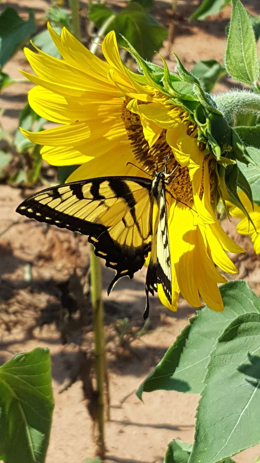 Draper Wildlife Management Area - park  | Photo 2 of 5 | Address: 1080 Brattonsville Rd, McConnells, SC 29726, USA