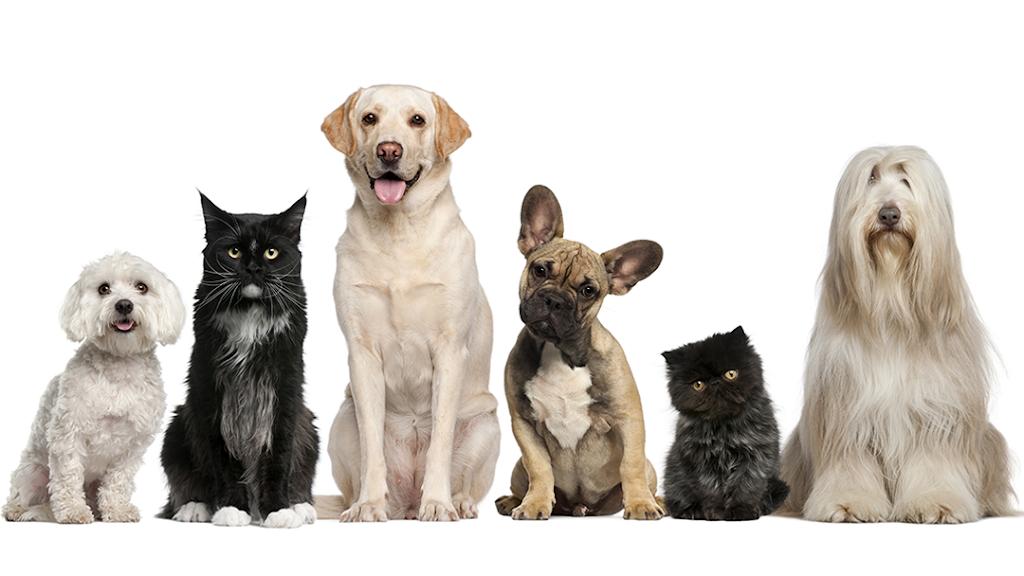 Skaer Veterinary Clinic - veterinary care  | Photo 3 of 10 | Address: 404 S Edgemoor St #100, Wichita, KS 67218, USA | Phone: (316) 683-4641
