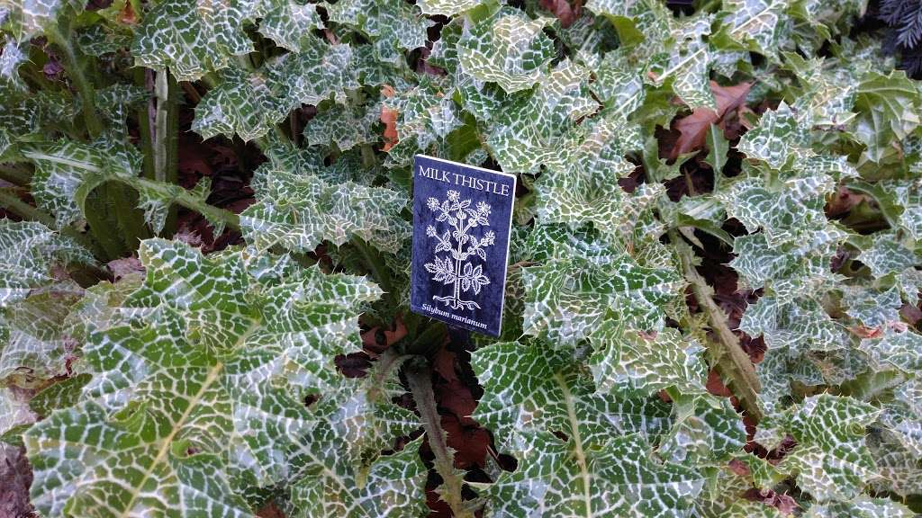 Shakespeare Garden - park  | Photo 2 of 8 | Address: 990 Washington Ave, Brooklyn, NY 11225, USA | Phone: (718) 623-7200
