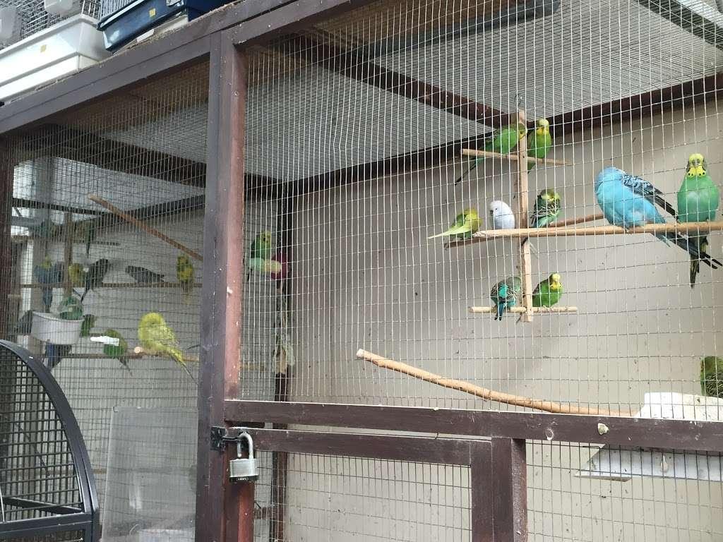 The Enfield Bird Centre bird cages - pet store  | Photo 5 of 10 | Address: Cattlegate Rd, Enfield EN2 9DS, UK | Phone: 020 8367 9223