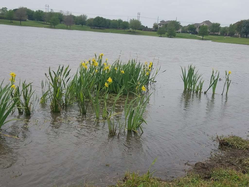 Telfair Community Park - park  | Photo 8 of 10 | Address: Chatham Ave, Sugar Land, TX 77479, USA