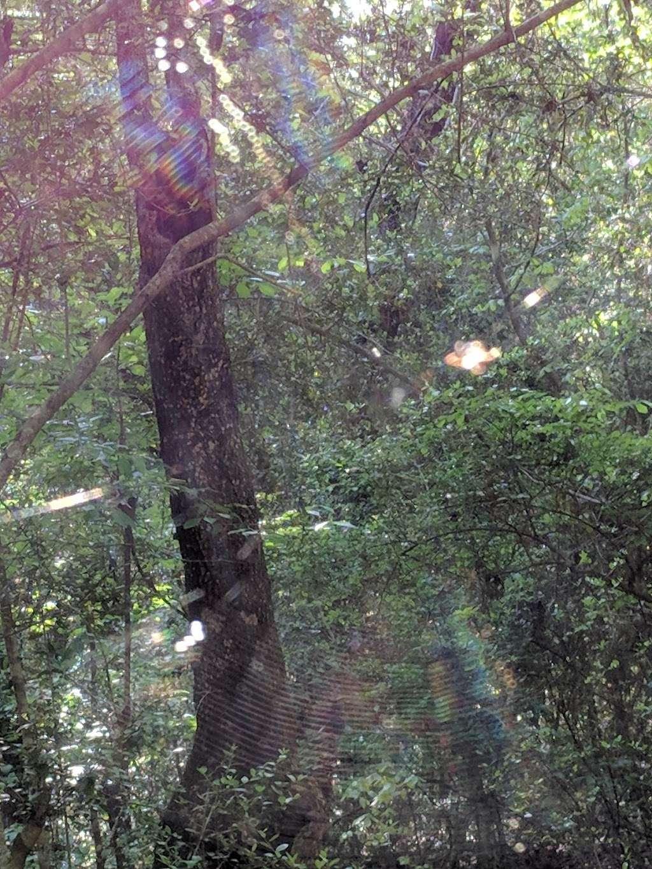 Lone Star Trailhead #4 - park  | Photo 4 of 9 | Address: FM 149, Montgomery, TX 77356, USA | Phone: (936) 344-6205