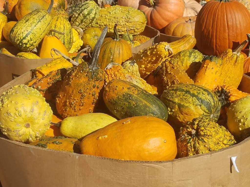 Ideal Farm Garden Center - store  | Photo 2 of 10 | Address: 222 NJ-15, Lafayette Township, NJ 07848, USA | Phone: (973) 579-3893