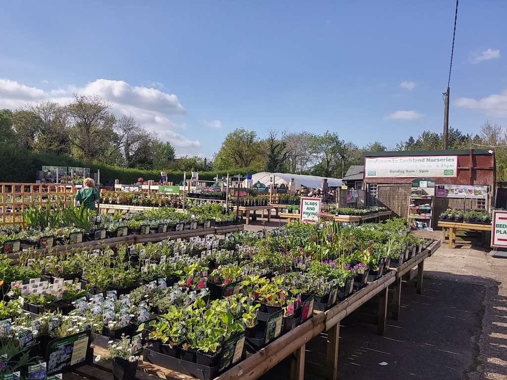 Buckland Nurseries Garden Centre - store  | Photo 6 of 10 | Address: Reigate Rd, Reigate, Betchworth RH2 9RE, UK | Phone: 01737 242990