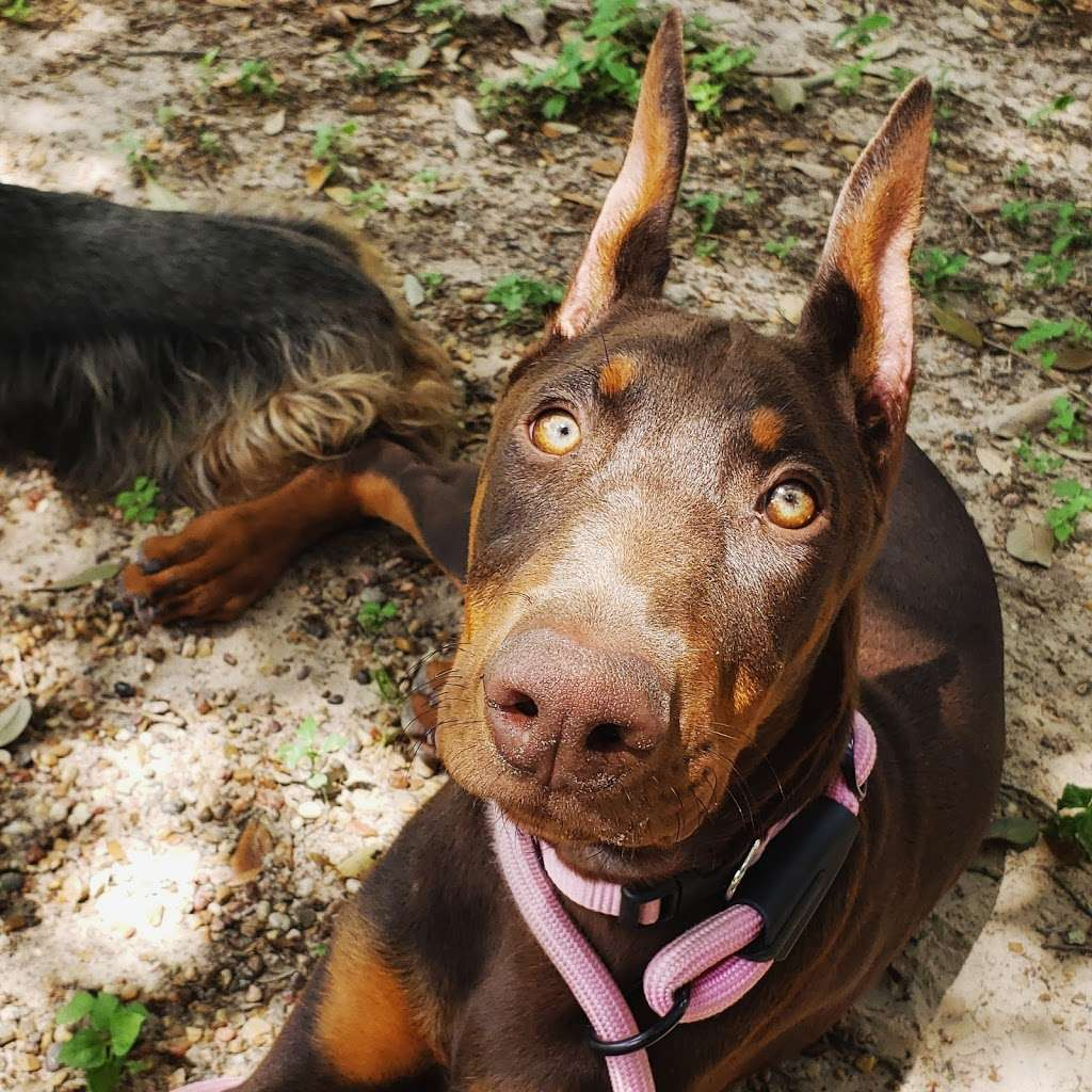 Houstons Ear Cropping Clinic - veterinary care  | Photo 4 of 10 | Address: 27351 Blueberry Hill Dr #37, Oak Ridge North, TX 77385, USA | Phone: (713) 818-7956