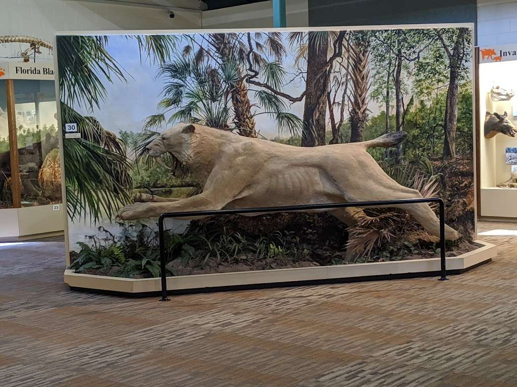 Silver River Museum & Environmental Education Center - museum  | Photo 4 of 10 | Address: 1445 Northeast 58th Avenue, Ocala, FL 34470, USA | Phone: (352) 236-5401