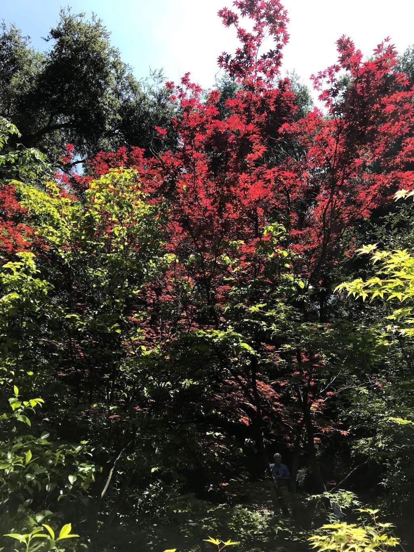 Hilltop Garden - park  | Photo 4 of 5 | Address: La Cañada Flintridge, CA 91011, USA