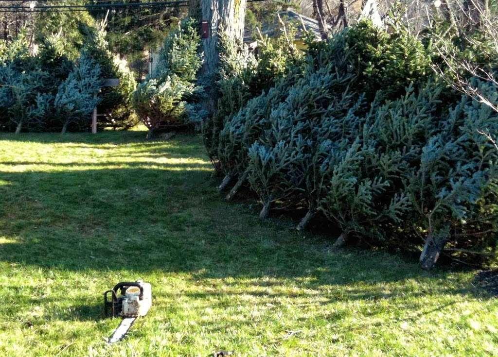 Country Gentleman Christmas Trees & Firewood - store    Photo 5 of 5   Address: 115 Washington Valley Rd, Warren, NJ 07059, USA   Phone: (732) 356-1178