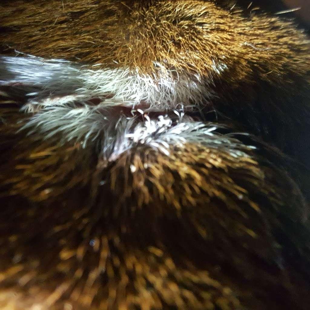 Rush Veterinary Center - veterinary care  | Photo 10 of 10 | Address: 9 Lafayette Ave, Tamaqua, PA 18252, USA | Phone: (570) 668-1222