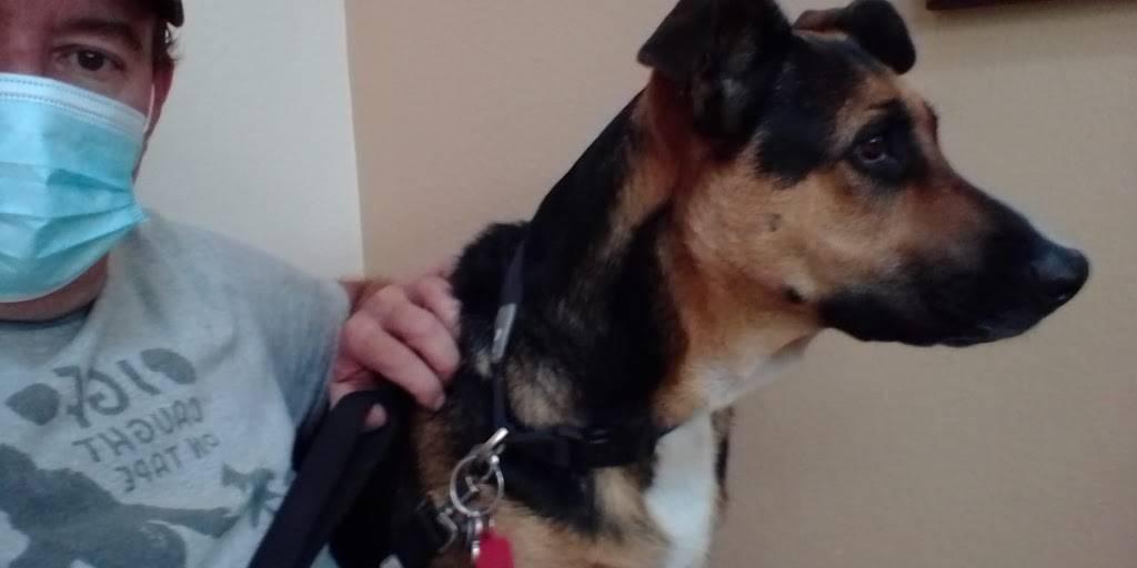 Canyon Crossroads Animal Hospital - veterinary care    Photo 5 of 7   Address: 11804 NM-337, Tijeras, NM 87059, USA   Phone: (505) 281-2378