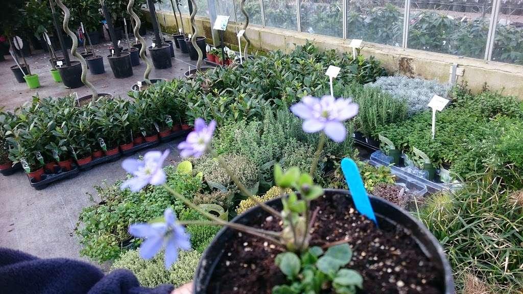 Matthews Plants - store  | Photo 4 of 10 | Address: Hadley Nursery, Tylers Rd, Roydon, Harlow CM19 5LJ, UK | Phone: 01279 793539