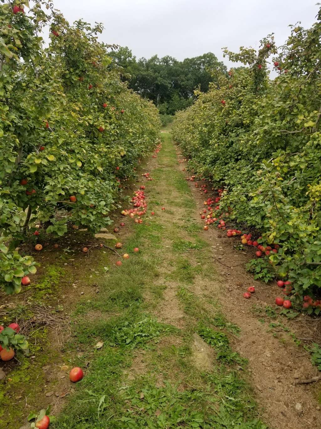 Barden Family Orchard - store  | Photo 6 of 10 | Address: 56 Elmdale Rd, North Scituate, RI 02857, USA | Phone: (401) 934-1413