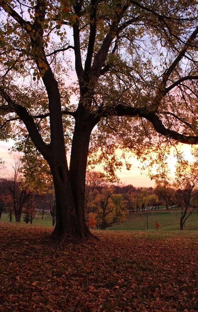 Louisville Metro Parks - park  | Photo 3 of 10 | Address: 1297 Trevilian Way, Louisville, KY 40213, USA | Phone: (502) 574-7275