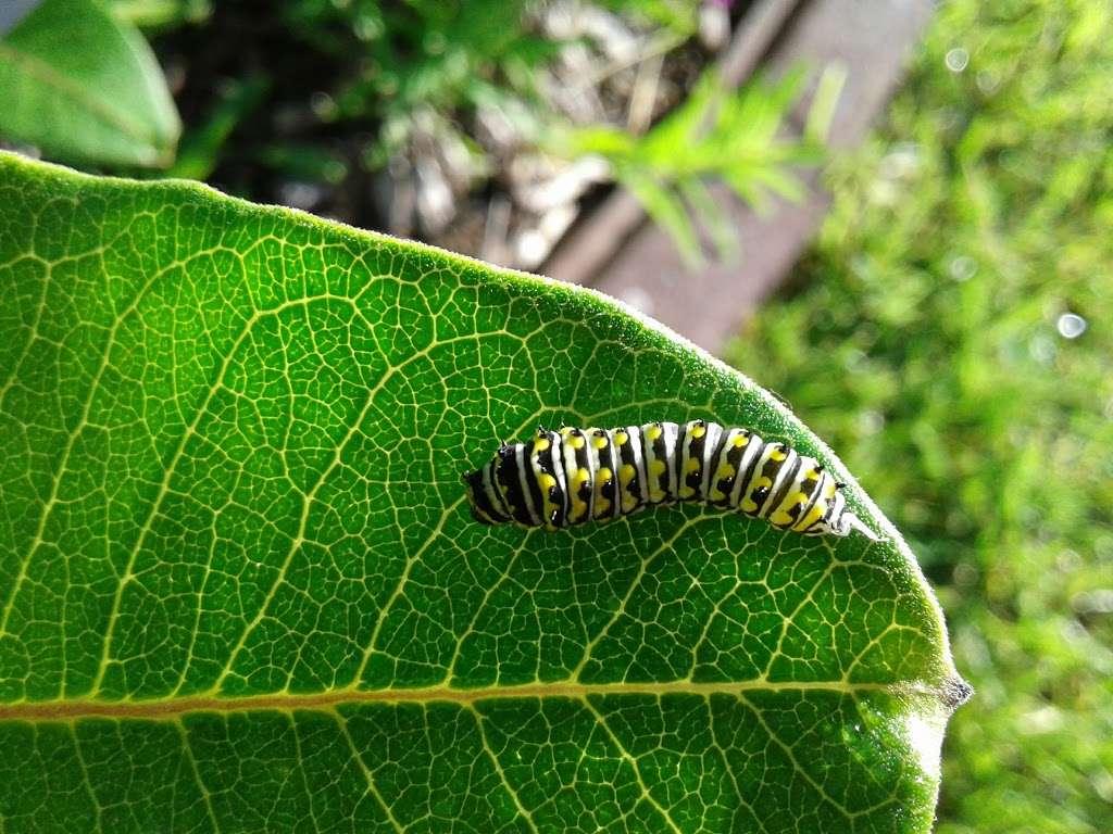 Pollinator Prairie - park  | Photo 3 of 10 | Address: 320 S Blake St, Olathe, KS 66061, USA | Phone: (913) 693-1905