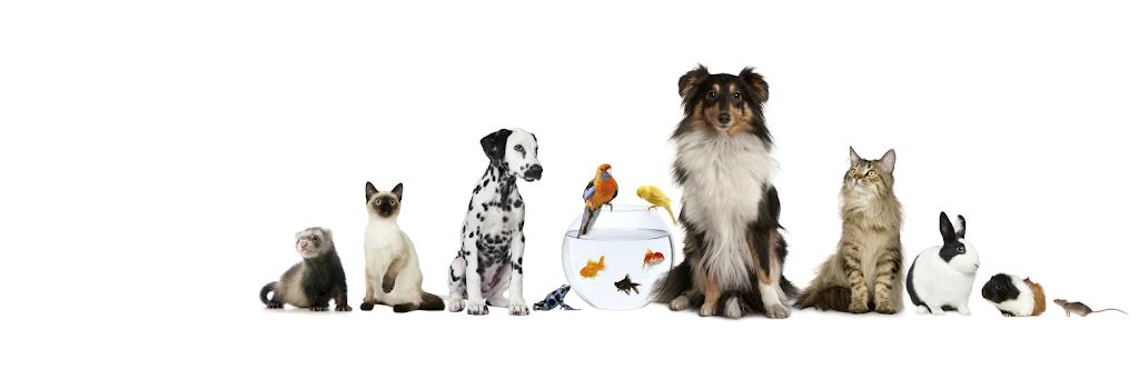 All Pets Animal Hospital & 24 Hour Emergency Care - veterinary care    Photo 1 of 10   Address: 24221 Kingsland Blvd, Katy, TX 77494, USA   Phone: (281) 392-7387