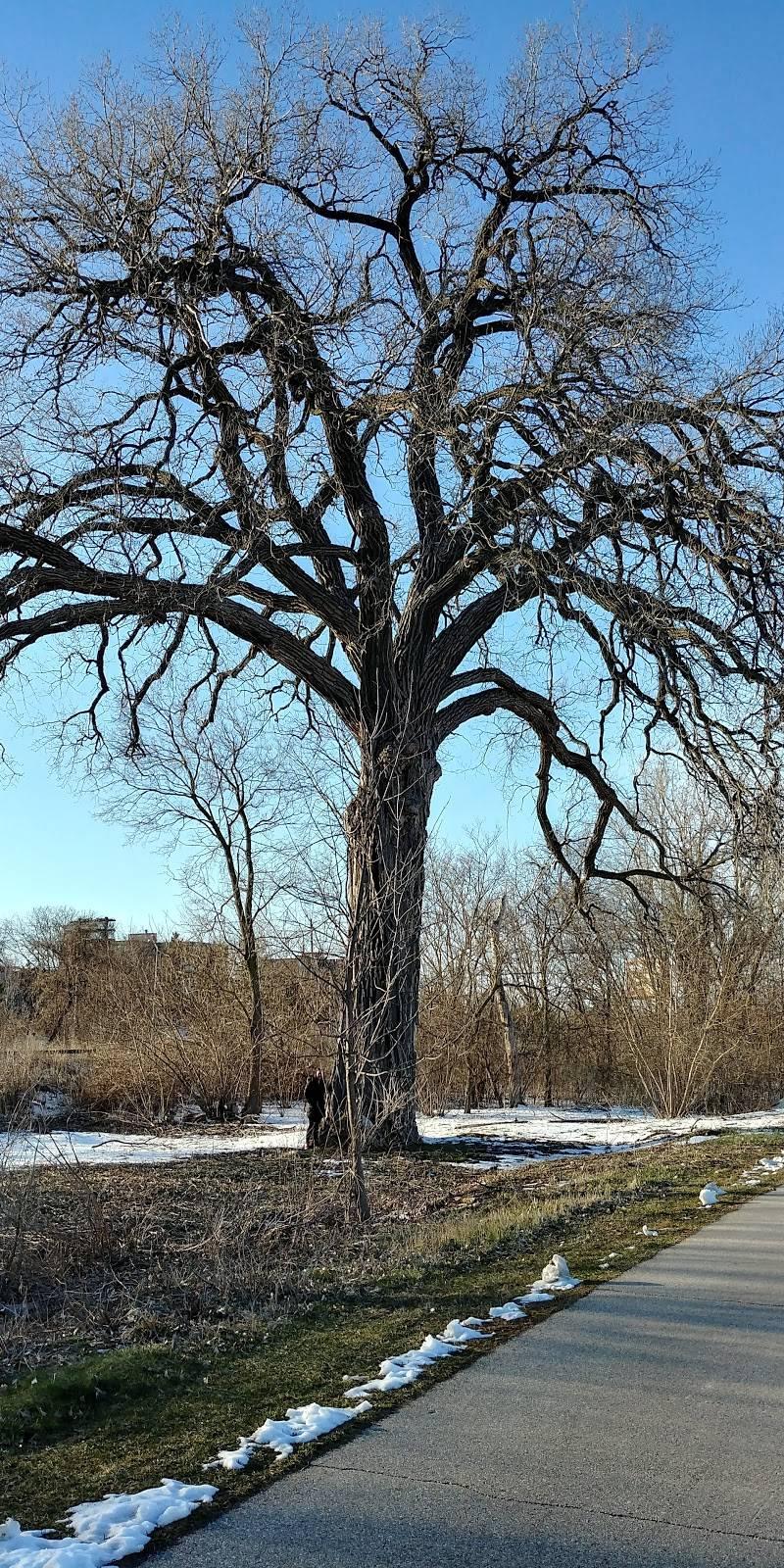 Burr Jones Park - park  | Photo 8 of 9 | Address: 1820 E Washington Ave, Madison, WI 53704, USA | Phone: (608) 266-4711