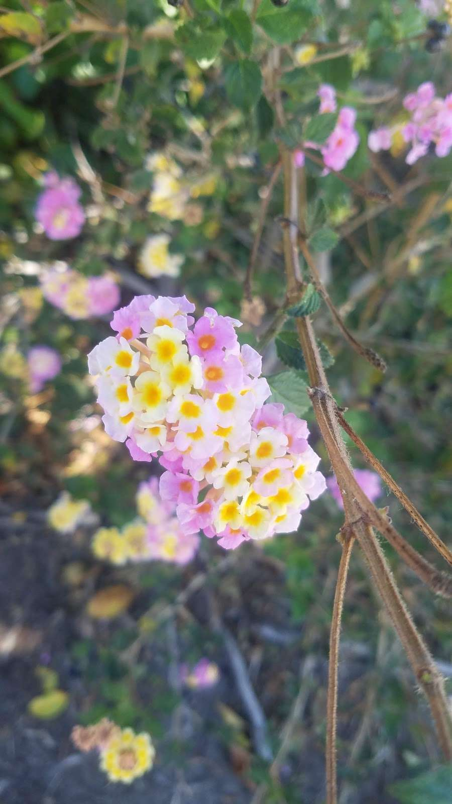 Paloma del Sol Rec 3 - park  | Photo 4 of 5 | Address: 31760 Calle Vimianzo, Temecula, CA 92592, USA