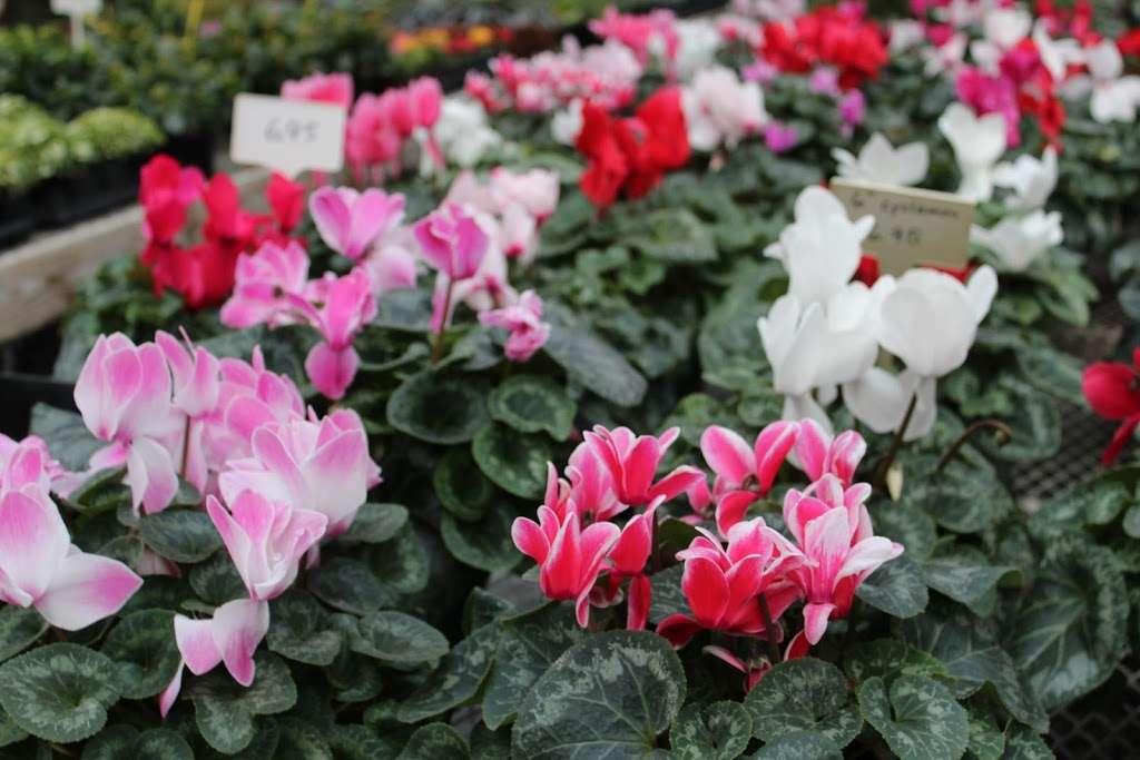 Shady Grove Greenhouse - store    Photo 4 of 10   Address: 122 Little Britain Rd, Nottingham, PA 19362, USA   Phone: (717) 529-3770