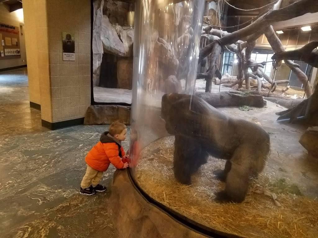 Hubbard Orangutan Forest - zoo    Photo 8 of 9   Address: 2119170000, Omaha, NE 68108, USA   Phone: (402) 733-8401
