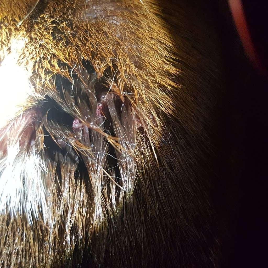 Rush Veterinary Center - veterinary care  | Photo 6 of 10 | Address: 9 Lafayette Ave, Tamaqua, PA 18252, USA | Phone: (570) 668-1222