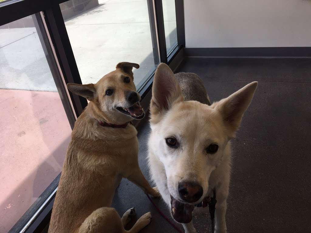 Orchard Veterinary Medical Center Inc - veterinary care  | Photo 4 of 6 | Address: 13648 Orchard Pkwy #700, Westminster, CO 80023, USA | Phone: (720) 974-0040