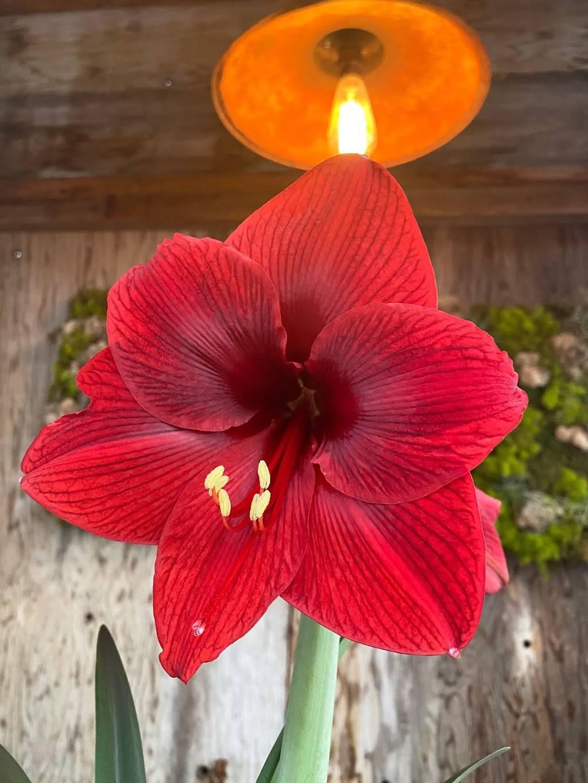 Edwards Greenhouse - florist  | Photo 10 of 10 | Address: 4106 Sand Creek St, Boise, ID 83703, USA | Phone: (208) 342-7548