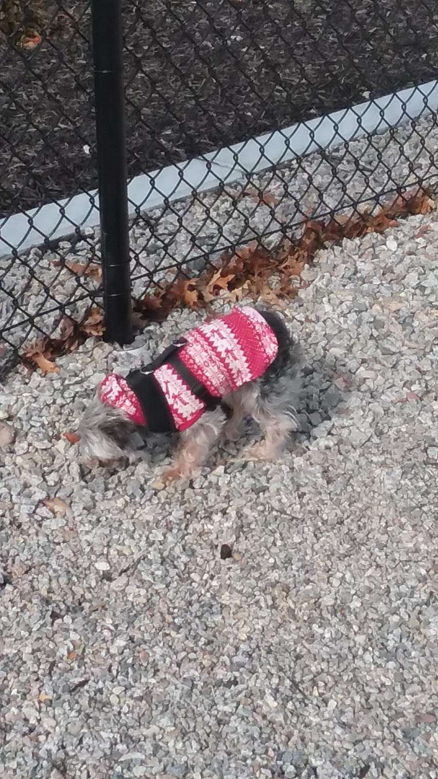 Boneyard Dog Park - park  | Photo 6 of 10 | Address: Kingston, MA 02364, USA