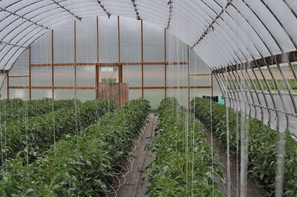 Fruitwood Farms, Inc. - store  | Photo 6 of 10 | Address: 419 Elk Rd, Monroeville, NJ 08343, USA | Phone: (856) 881-7748