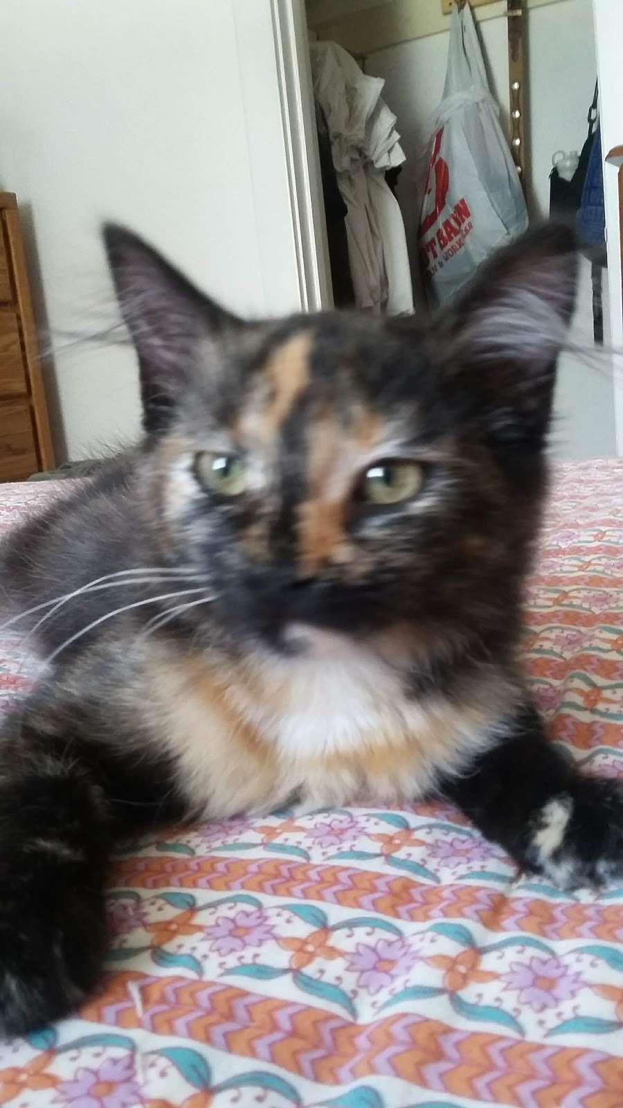 Five Star Veterinary Center - veterinary care  | Photo 4 of 8 | Address: 13725 Foothill Blvd, Sylmar, CA 91342, USA | Phone: (818) 362-6599