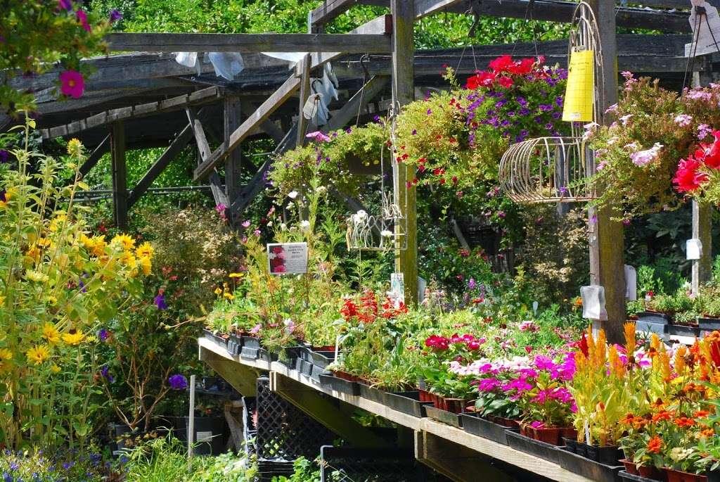 Plant Works - florist  | Photo 8 of 10 | Address: 7945 Hwy 9, Ben Lomond, CA 95005, USA | Phone: (831) 336-2212