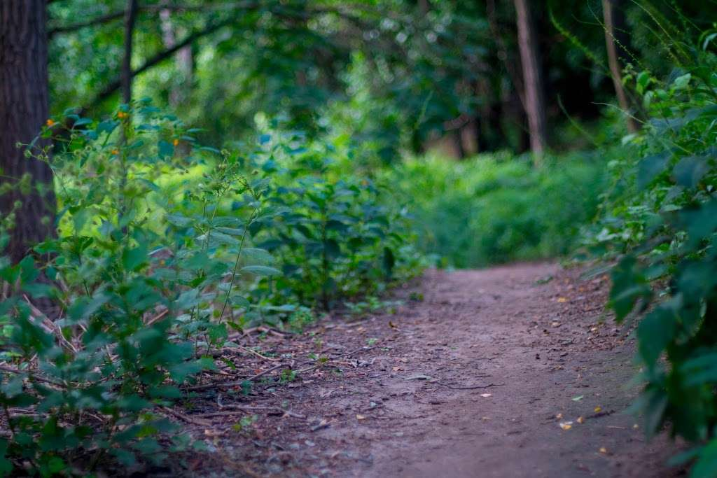 Raoul Wallenberg Forest - park  | Photo 2 of 6 | Address: Douglas Ave, Bronx, NY 10463, USA | Phone: (212) 639-9675