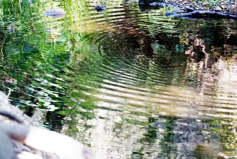 Walnut Creek Trail - park  | Photo 3 of 10 | Address: 1079 S San Dimas Ave, San Dimas, CA 91773, USA