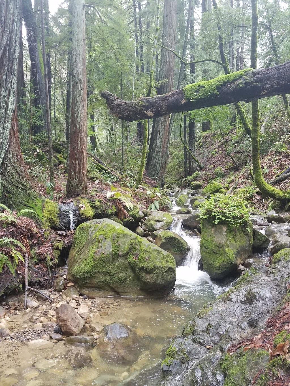 Sam Trail - park  | Photo 10 of 10 | Address: 15808 Sanborn Rd, Saratoga, CA 95070, USA